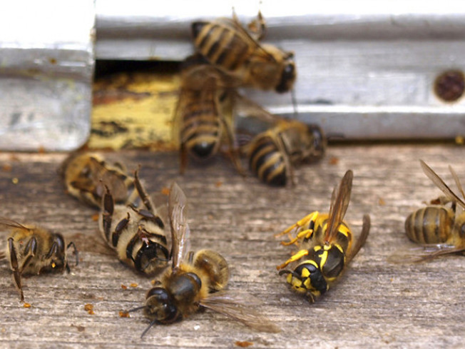 Бджоли / Фото ілюстративне